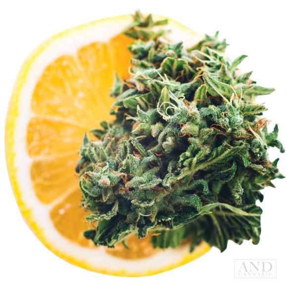 tangerine dream strain flower bud