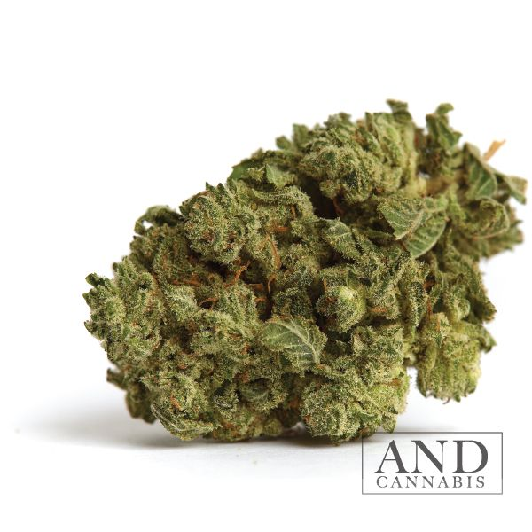 wedding cake cannabis strain bud