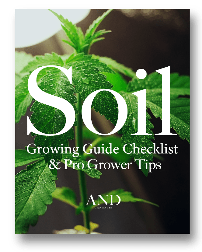 grow cannabis in soil guide