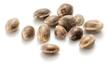 grouped cannabis seeds